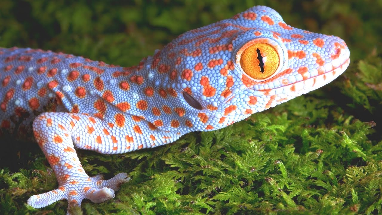 Gecko types list pictures 15 Great College and University Photography Programs in US
