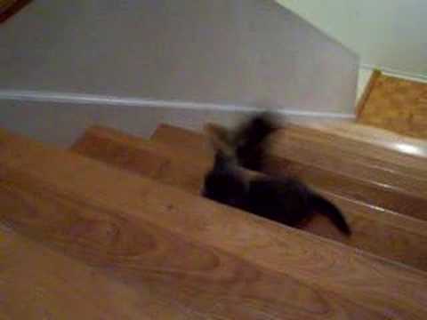 Kitten  going down the stairs
