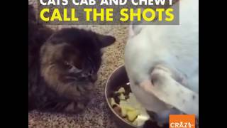 The cats call the shots in this adorable fur family.