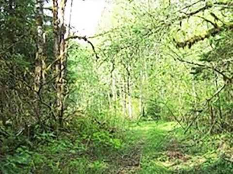 Homes for Sale - 53936 Rockport Cascade Rd Rockport WA 98283 - Richard Kiesser