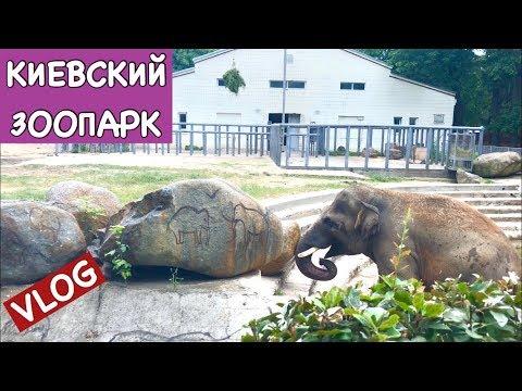 Vlog: Мы в Киевском Зоопарке