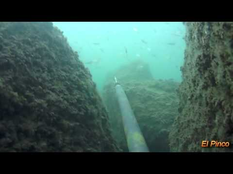 Spear fishing 1st class worldwide videos 2015