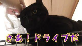 ドライブ行くよ! 子猫 保護 116日目