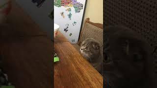 прикол с котом
