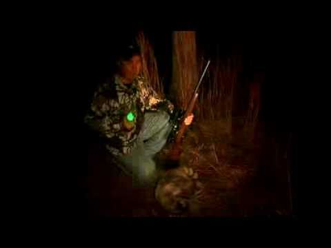 Racoon Hunting at Night with Gamo Varmint Hunter Air Rifle
