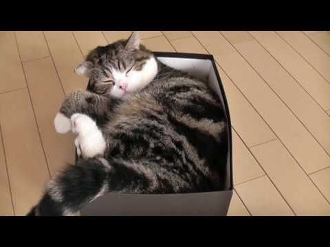 箱とねこ3。-A box and Maru 3.-