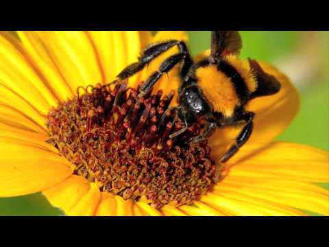 The Real Group - Bumble Bee (Special)