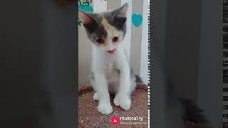 Kittens- Baby shark