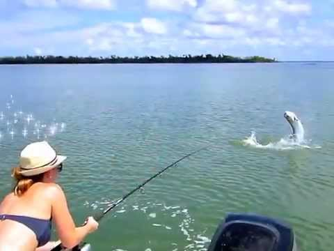 Kristy's Pine Island Sound Tarpon!!