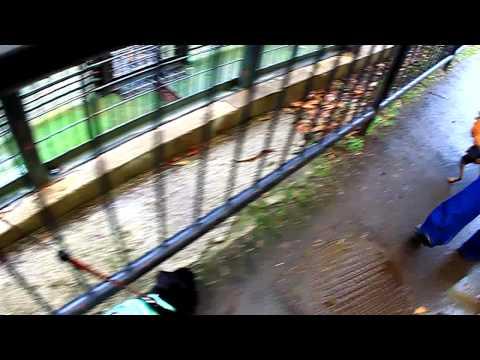 【愛犬と動物園】2010.01.21伊豆バイオパーク3