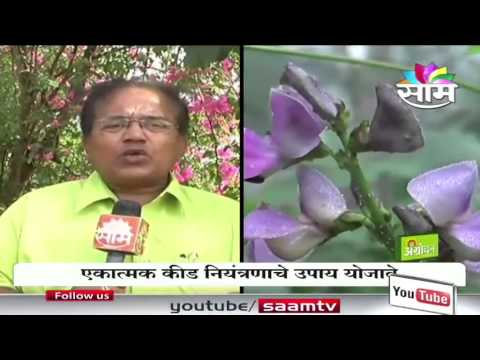 Dr.Pandurang Mohite on  vegetable crops worm control