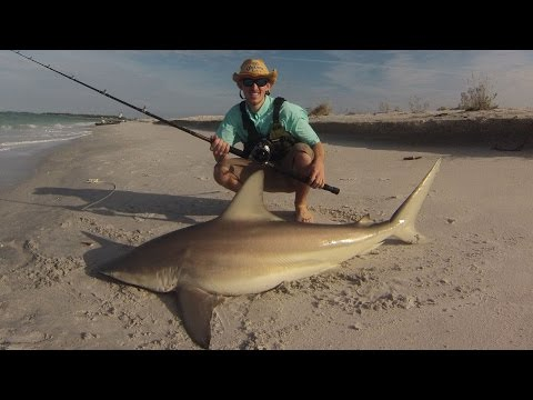 Landbased Blacktip Shark Fishing Southwest Florida