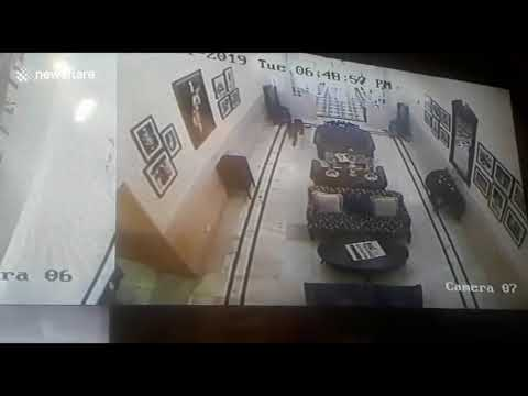 Leopard stalks hotel lobby at famous hill station in north India