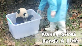 Nanny Gives Panda A Fun Ride | iPanda