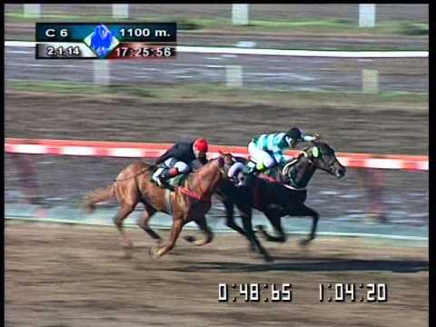ROMAN SHORE (Hipódromo de La Plata 02/01/2014)