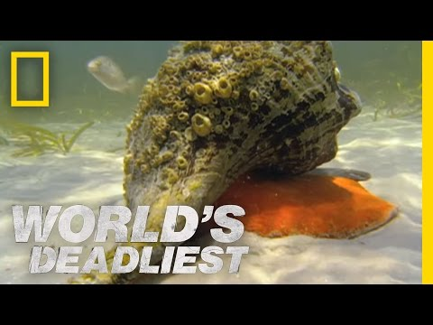 World's Deadliest - Hermit Crab vs. Conch