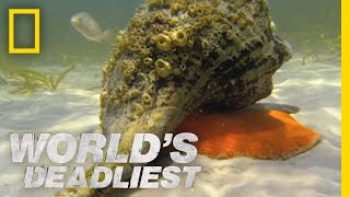 Hermit Crab vs. Conch | World