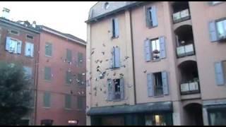 Piazza Redecocca a Modena
