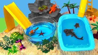 Sea Animals Toys and Water Slides - Learn Animal Names For Kids