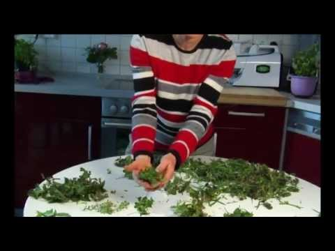 Wildkräuter Und Essbare Heilpflanzen: Giersch