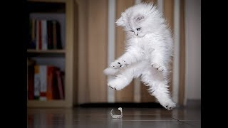 FUNNY VIDEOS: Cats and Dogs | Very funny Animals