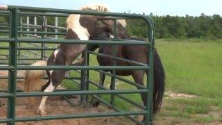 Horse Sex Video - Magic and Bella