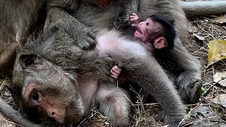 Meaning of Life! Poorest mum with new born baby can't go more Youlike Monkey