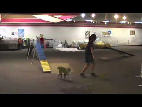 Villa La PAWS - Agility for Fun 1 - November 2012