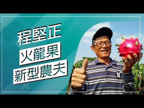 台灣-草地狀元-20180205 2/2-巨無霸火龍果達人