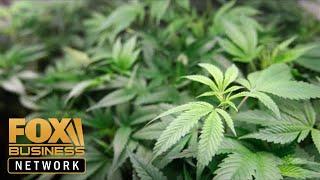 Marijuana taxes too high for California pot growers