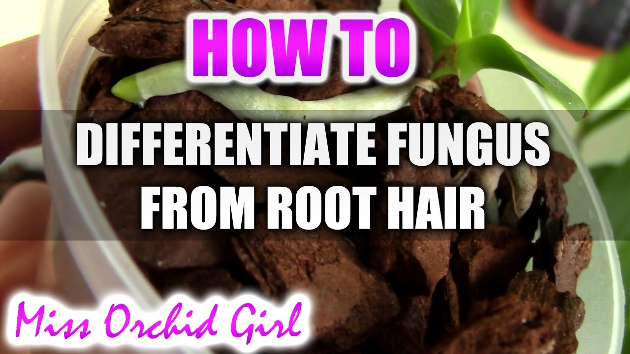 How To Differentiate White Fungus Or Mold From Root Hair