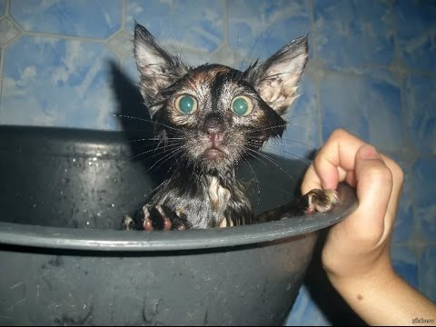 Водные процедуры животных - смешное купание домашних животных