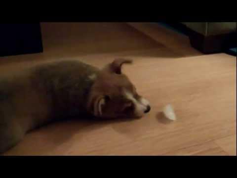Kiskutya játszik egy jégkockával