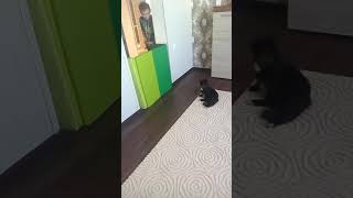 Прикол с котом//