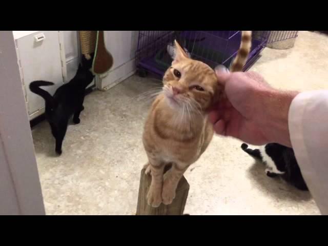 Super friendly kitten