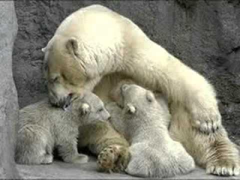 Los animales nacen..... - YouTube