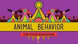 Animal Behavior - CrashCourse Biology #25