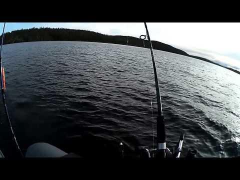 щербаковы рыбалка даунриггер