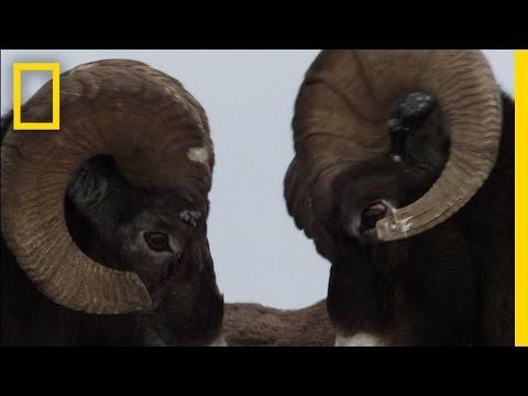 Big Horn Bash | Untamed Americas