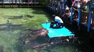 Como Alimentar a tu Tiburón