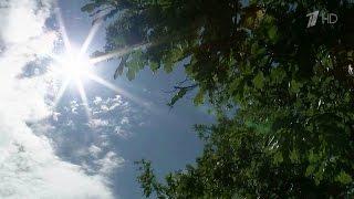 Синоптики подготовили прогноз погоды на выходные и первое сентября.