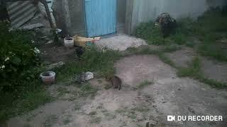 Игра котят