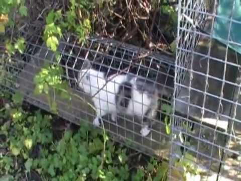 The cat s den short movie cats enjoying thier outdoor run by home of