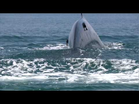 Blue Whales Of Sri Lanka.mov video