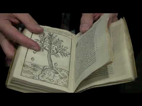 Harry Potter's Herbology Class with Rare Books