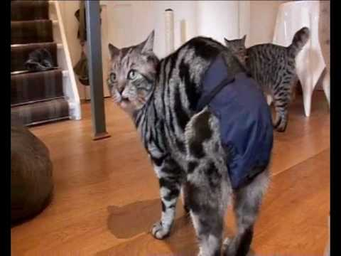 male cats spraying indoors