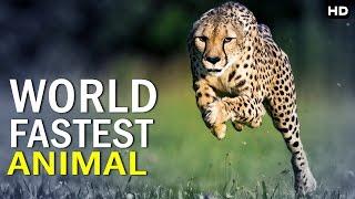 कौन हे दुनियाका सबसे तेज भागने वाला जानवर | World Fastes Animal
