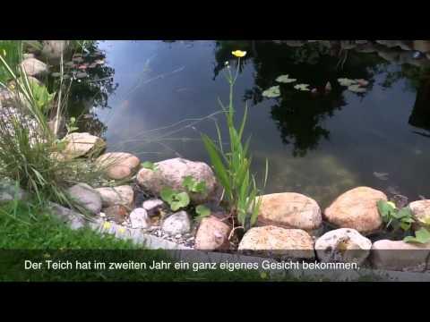 Gartenteich & Neuer Bachlauf