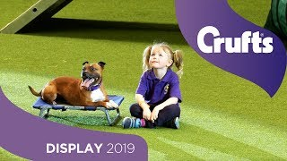 The East Anglian Staffordshire Bull Terrier Display Team   Crufts 2019