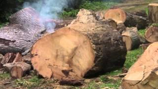 Redneck Log Splitter, Black Powder Method